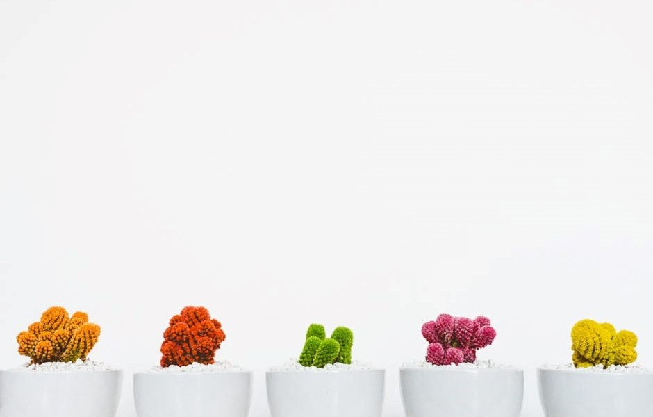 row of coloured plants in white pots